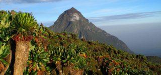 History of Virunga National Park