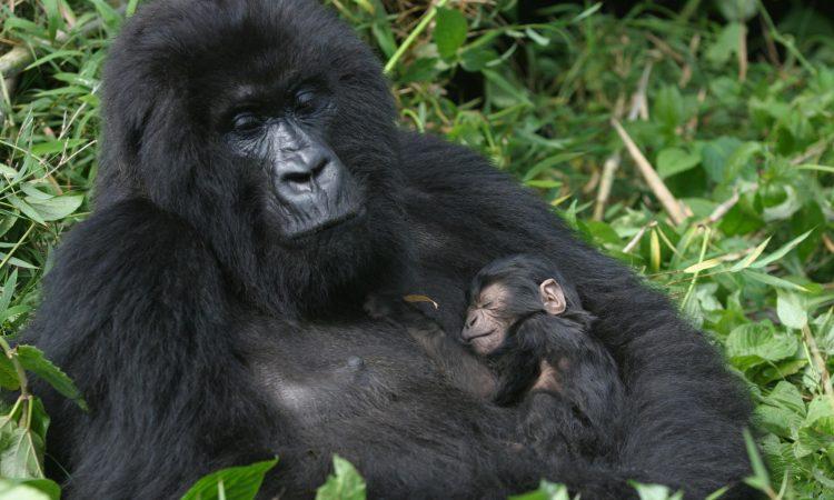 5 Days Virunga and Volcanoes National Park