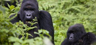 DRC Congo Travel Tips, Information