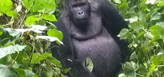 8 Days Virunga, PNV & Bwindi