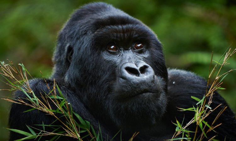 Congo Tours and Travel Operators