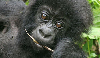Virunga National Park Safaris